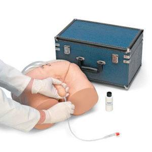 Male Catheterization Simulator